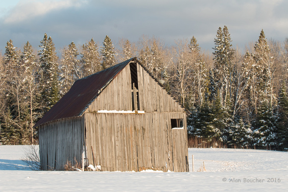 Old Shed by the Pines