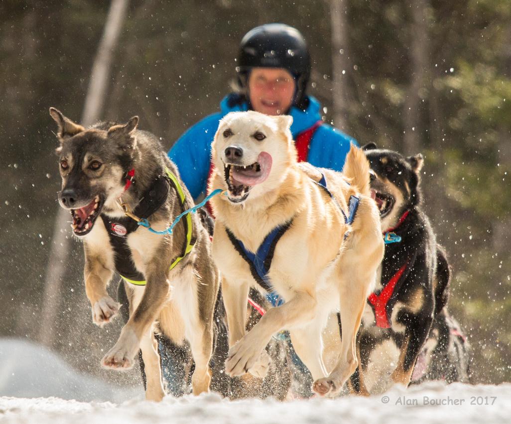 John Beargrease Sled Dog Marathon