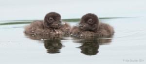 Mirrored-Chicks