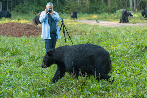 Capturing the Black Bear